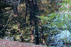 Autumn in the mirror - herbstreflektionen (Sockenhummel) Tags: fuji x30 fujifilm finepix fujix30 fenn fennsee herbst autmn fall park volkspark wasser spiegelung reflektion reflection bume