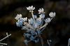 An der Wuhle (naturlicht) Tags: wuhle frost wildblume berlinhellersdorf berlin deutschland