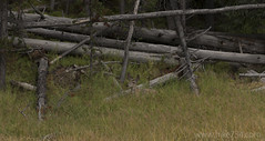 """Mule Deer • <a style=""""font-size:0.8em;"""" href=""""http://www.flickr.com/photos/63501323@N07/30617629072/"""" target=""""_blank"""">View on Flickr</a>"""
