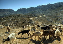 Crete and goats (neilalderney123) Tags: 2016neilhoward goats crete greece hellas mountains olympus landscape livestock