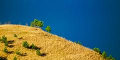 Windswept ridge (Raoul Pop) Tags: grass trees hilltop ridge sky evergreens drygrass pines windswept fall medias transilvania romania ro