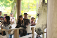 XPRO1841 (Ise / nemo) Tags: horse japan