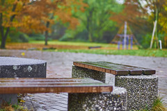 IMG_9253 1 (M. Damberg) Tags: duisburg herbst autumn farbenfroh regnerisch bunt spiegelung laub bank bnke unscharf unschrfe steinplatte klettergerst baum rip gras regen regentropfen