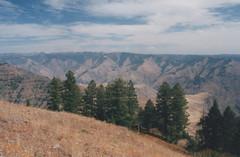 Hell's Canyon Overlook 3, 2016 (Sara J. Lynch) Tags: sara j lynch hells canyon overlook eastern oregon trees erosion rugged nikon 35mm film