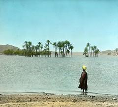 #Partly submerged palms above Nile dam, Upper Egypt., 1908 [2776 x 2528] #history #retro #vintage #dh #HistoryPorn http://ift.tt/2goZfxb (Histolines) Tags: histolines history timeline retro vinatage partly submerged palms above nile dam upper egypt 1908 2776 x 2528 vintage dh historyporn httpifttt2gozfxb