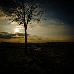 2016 10 29 - Sunset-3 (OliGlo1979) Tags: fuji luxembourg xt2 xf1655 landscape sunset horse silhouette