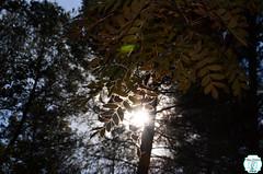 Hit me like a ray of sun. (Patricia Martnez Fotografa) Tags: nature leaves autumn sunray spain