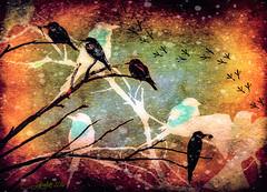 Catness Birds (clabudak) Tags: snow winter branches tree birds texture footprints artwork artdigital