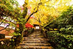 Autumn Stone Steps (moaan) Tags: kyoto japan jp autumn november temple jakkouin autumnleaves autumncolors rain stonesteps momiji japanesemaple canoneos5dsr ef1635mmf4lisusm 京都 寂光院