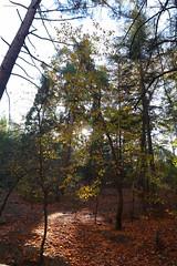 Troodos Geopark (45) (Polis Poliviou) Tags: polispoliviou polis poliviou   cyprus cyprustheallyearroundisland cyprusinyourheart yearroundisland zypern republicofcyprus  cipro  chypre   chipir chipre  kipras ciprus cypr  cypern kypr  sayprus kypros polispoliviou2016 troodosgeopark troodos mediterranean nicosia valley life nature forest historical park trekking hiking winter walking pine pines prodromos limassol paphos fall autumn geopark kakopetria