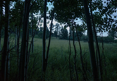 Things in the Trees (-mtnoxx-) Tags: landscape nature aspen trees rockymountains colorado grass meadow treeline