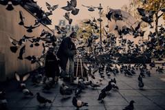 Parisian stories - Someone to love (Enricodot ) Tags: enricodot paris man pigeons centrepompidou people birds bird city street streetphotographer