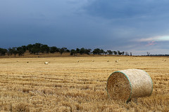 Darling Downs (Alan McIntosh Photography) Tags: farm rural darling downs felton
