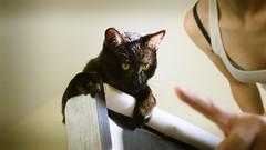 My Ganglia (jheanvitriago) Tags: gato animal pets cats felinos famila nikond7200