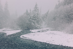 The Winter is Here (Sohail.Fazluddin) Tags: scenic landscape crystalmountain river snow snowfall snowing whiteriver white trees dramatic windy snowy
