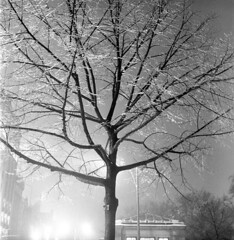 020459 04 (ndpa / s. lundeen, archivist) Tags: nick dewolf nickdewolf blackwhite photographbynickdewolf tlr bw 1959 1950s february winter boston massachusetts beaconhill night nighttime wintersnight park common bostoncommon tree branches snow snowy snowfall trees film 6x6 mediumformat monochrome blackandwhite light lights ice icy iced coveredwithice coveredinice glazed transitstation
