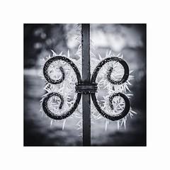Frost in wunderschön.. (livifee) Tags: frost raureif winter tor eisen kalt cold sw bw