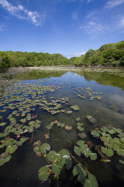 Bosherton Lakes, Stackpole, Pembrokeshire