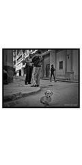 Havana, people(dogs)and place-53 (deangeli.federica) Tags: blakandwhite havana cuba streetphotography habana reportage lahabana strret avana canong10