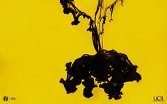 BG Desktop Yellow (Daniel VC) Tags: daniel ucr icp valverde picado clodomiro