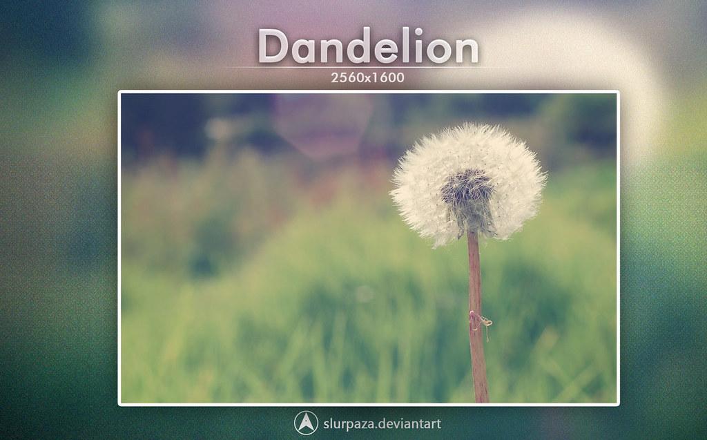 dandelion_by_slurpaza-d5xz5h5