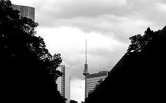 Berlin vor dem Sommergewitter Leica IIf Elmar 9 cm (CourtLux) Tags: fujiacros100 leicaiif epsonv700 elmar9cm