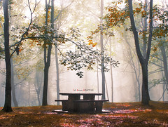 Niebla y sol en Urkiola (Jabi Artaraz) Tags: autumn sony otoo zb bizkaia urkiola hayedo udazkena pagadia merendero euskoflickr superaplus aplusphoto jartaraz alfa350