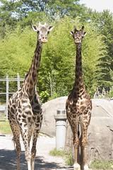 _MG_9230 (thehumanerase) Tags: elephant bird animals island zoo penguin monkey williams zebra giraffe roger rhode easton