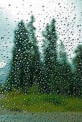 Rainy Day (aitramah) Tags: rain vertical rainy alberta raindrops verticallandscape verticalphotography verticalnature