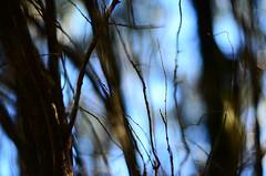 (lincoln koga) Tags: blue light sky verde folhas luz nature leaves azul 50mm nikon dof cotidiano cu observe lugares lincoln urbano beleza luzes abstrato tempo galhos passeio momentos olhares criao f12 cidades cerulean foco simplicidade desfoque observando koga manchas encontros aprendizado explorando chamado admirao suavidade contemplao ebf 2013 pedaosdemim expressando aguardo euvejo lincolnkoga 50tinha novosrumos d7000 euencontro meutempo lincolnseijikoga novoslugares novosolhares meumomento acampamentomoriah refgiosecreto silncioreflexivo tempodesilncio meusencontros voudescobrindo vouexplorando ofertadeamor teentrego nossoviver tudoemmim aguardoporvoc