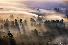 An Early Morning at Desa Pinggan (eggysayoga) Tags: morning shadow bali tree fog sunrise indonesia lens landscape nikon asia village sigma os telephoto tele f28 rol rayoflight 70200mm kintamani desa pinggan d7000