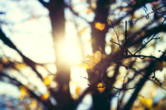 Autumn light (Maegondo) Tags: autumn sunset sun tree nature backlight 35mm canon germany bayern deutschland bavaria eos leaf dof bokeh 14 depthoffield walimex ingolstadt samyang 5dmark2