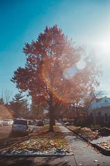 Untitled (40) (dvlmnkillatron) Tags: tree fall film analog 35mm olympus lensflare om2n