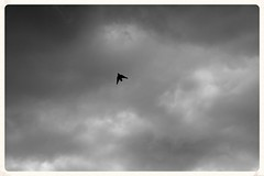 The bird (Zelda Wynn) Tags: bw weather auckland artgalleryofnsw cloudscape troposphere zeldawynnphotography