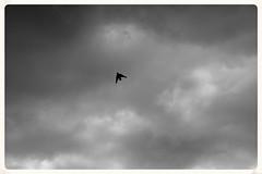 The bird (Zelda Wynn) Tags: bw weather auckland artgalleryofnsw cloudscape troposphere zeldawynnphotography