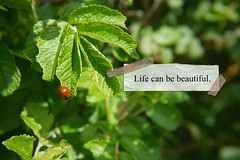 Life Can Be Beautiful (FVPhotography) Tags: life park bird beautiful beauty lady image text victoria caption southport
