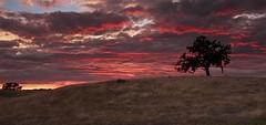 Oak Burn (ernogy) Tags: ernogy folsom landscape california ca clouds canon colors nature northerncalifornia oak oaktree silhouette sky sunrise sunset usa outdoors foothills canon7d