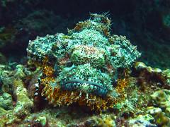 IMG_2044 (Net Diver) Tags: travel nature coral thailand island alpina diving padi phuket reef вода природа отель путешествия owd остров обучение rachayai 2013 kohrachayai тайланд риф пхукет открытая коралловый andamanian