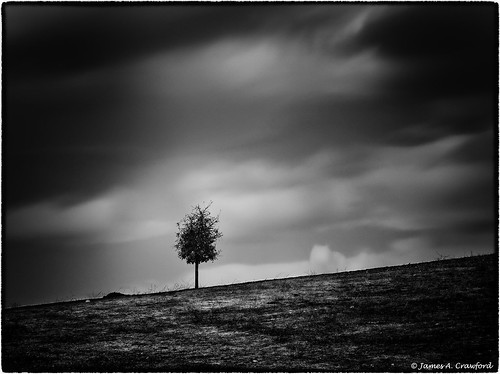 A Young Tree Standing Alone
