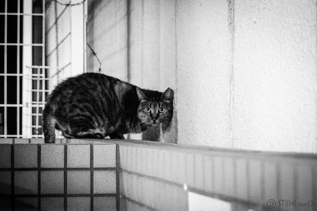 Today's Cat@2013-12-04