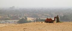 Cairo, Egypt 2010 (Sound Quality) Tags: africa man canon landscape desert egypt unesco cairo camel giza canon50d spirit7628yahoocom httpsoundqualitytumblrcom