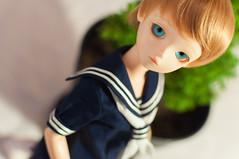 Jin Sailor Outfit (rururan) Tags: blue tree pine hair outfit eyes doll long olive skirt short vase bjd sailor abjd bluefairy balljointed