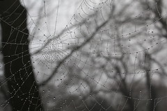 Web (music_man800) Tags: uk morning winter bw food white mist black cold tree home nature monochrome rain animal fog mystery forest canon fence grey mono spider early woods frost natural spiders web arachnid spin united gray january kingdom chrome dew yuck chilly grayscale essex greyscale intricate 2014 hockley gettingcloser 700d