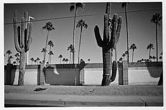 mesa 1016503 (m.r. nelson) Tags: arizona urban bw usa southwest monochrome america blackwhite az bn americana mesa urbanlandscapes artphotography mrnelson newtopographic micro43 markinaz nelsonaz olympuspenepl1