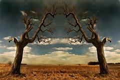 Prairie Portal (Tau Zero) Tags: farm country prairie baretrees digitalmirror transformationflip