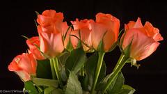 Bouquet (David S Wilson) Tags: uk flowers england ely fens 2014 nikon1 davidswilson lightroom5 nikonft1 micronikkor40mmf28lens