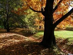 Autumn in Warsaw (Jacek Magryta) Tags: park autumn tree nature landscape poland polska jacek warsaw polamokotowskie masovia platinumheartaward mygearandme mygearandmepremium mokotwfield mygearandmebronze mygearandmesilver mygearandmegold mygearandmeplatinum ruby10