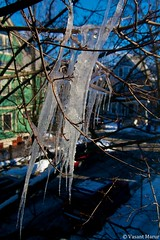 Icicles (Vasant Marur) Tags: usa cold tree ice nature ma frozen freezing somerville icicle icicles winter2014