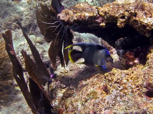 Perfect Pose: Looe Key Sanctuary Preservation Area, Florida Keys National Marine Sanctuary