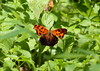 Butterfly (Desmojosh) Tags: trees nature forest canon butterfly river eos woods cove wildlife nj l delaware usm palmyra 56 400mm 70d